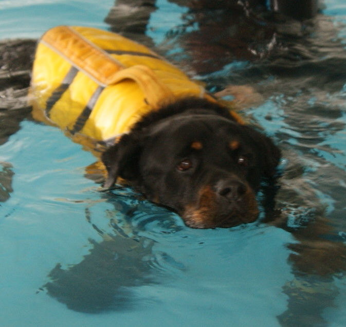 Diesel at hydrotherapy