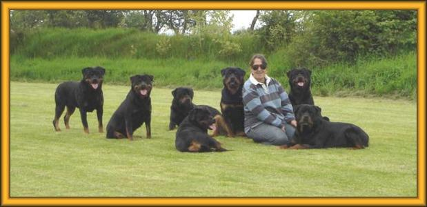 Cameus Rottweilers